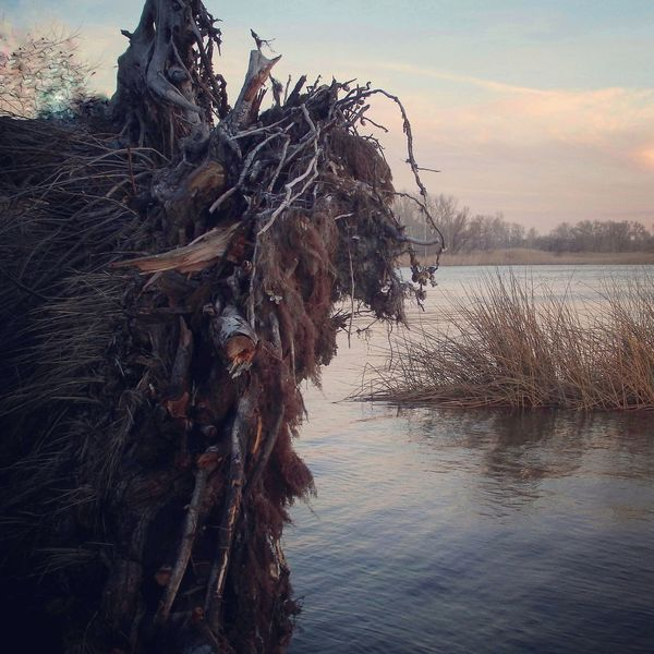 Water Tree Sky Animal Themes Sunset Outdoors Nature No People Beauty In Nature Beast Beauty Riverside River View Riverbank Roots Of Tree Root Fallen Tree Watching Sundown