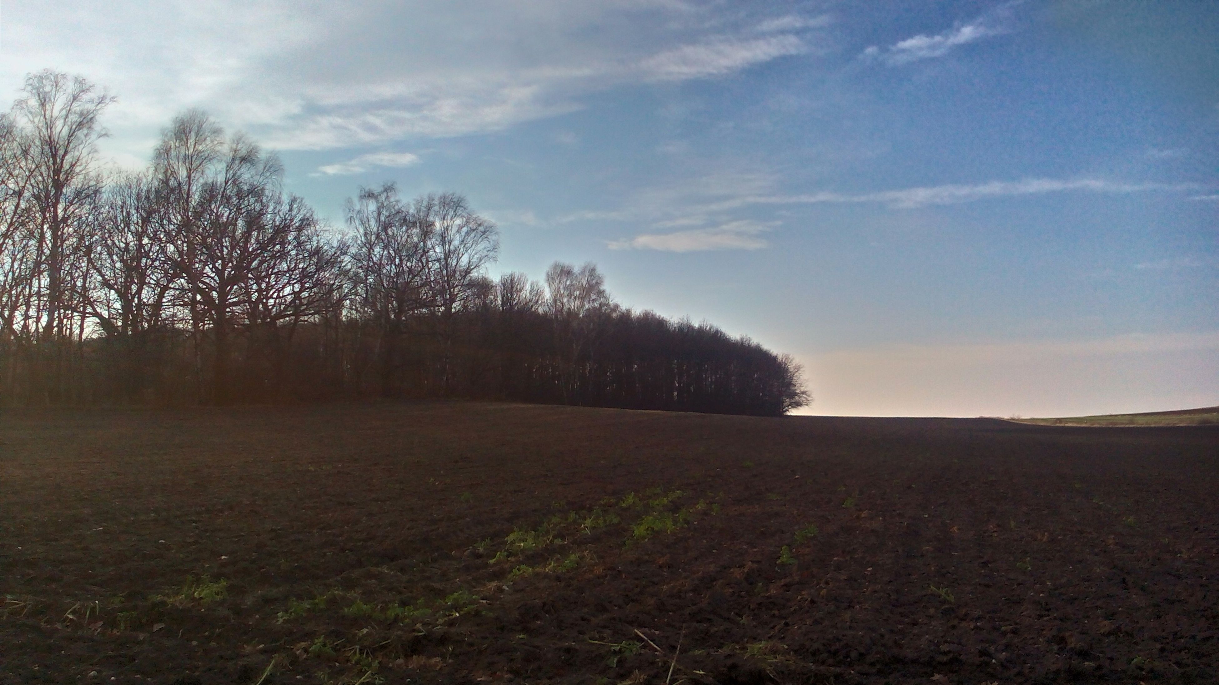 tree, sky, landscape, tranquil scene, tranquility, field, scenics, nature, beauty in nature, cloud - sky, cloud, non-urban scene, rural scene, growth, grass, silhouette, remote, solitude, outdoors, no people