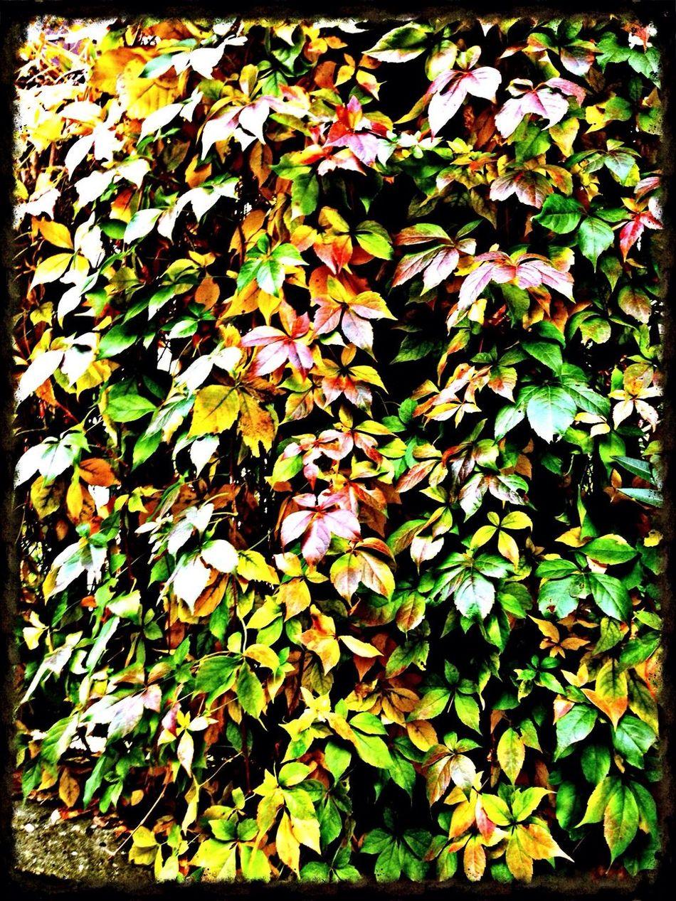 Autumn Leaves OctoberLove October