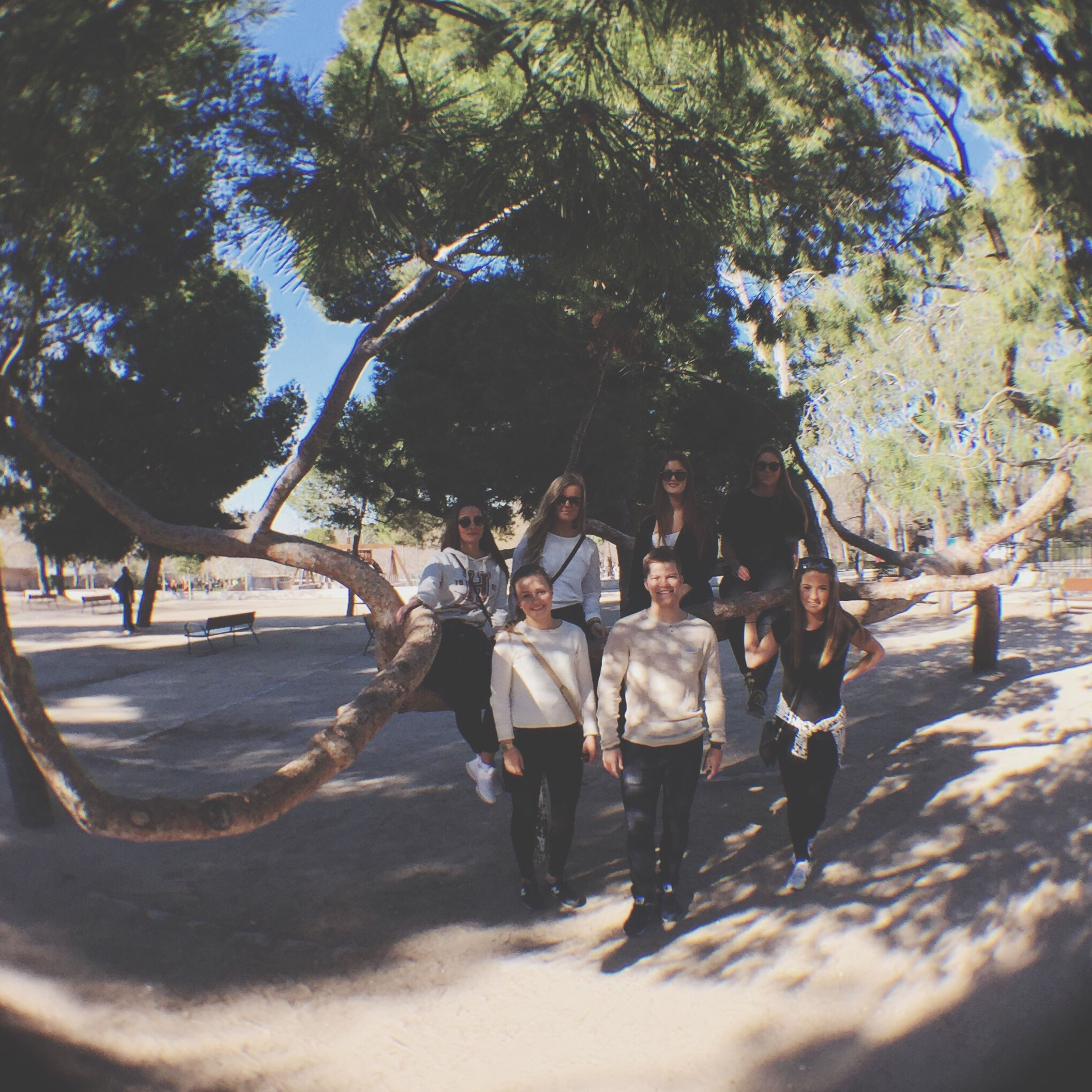 tree, men, lifestyles, leisure activity, sand, walking, beach, person, shadow, sunlight, large group of people, full length, nature, tourist, vacations, day, togetherness, rear view, tree trunk