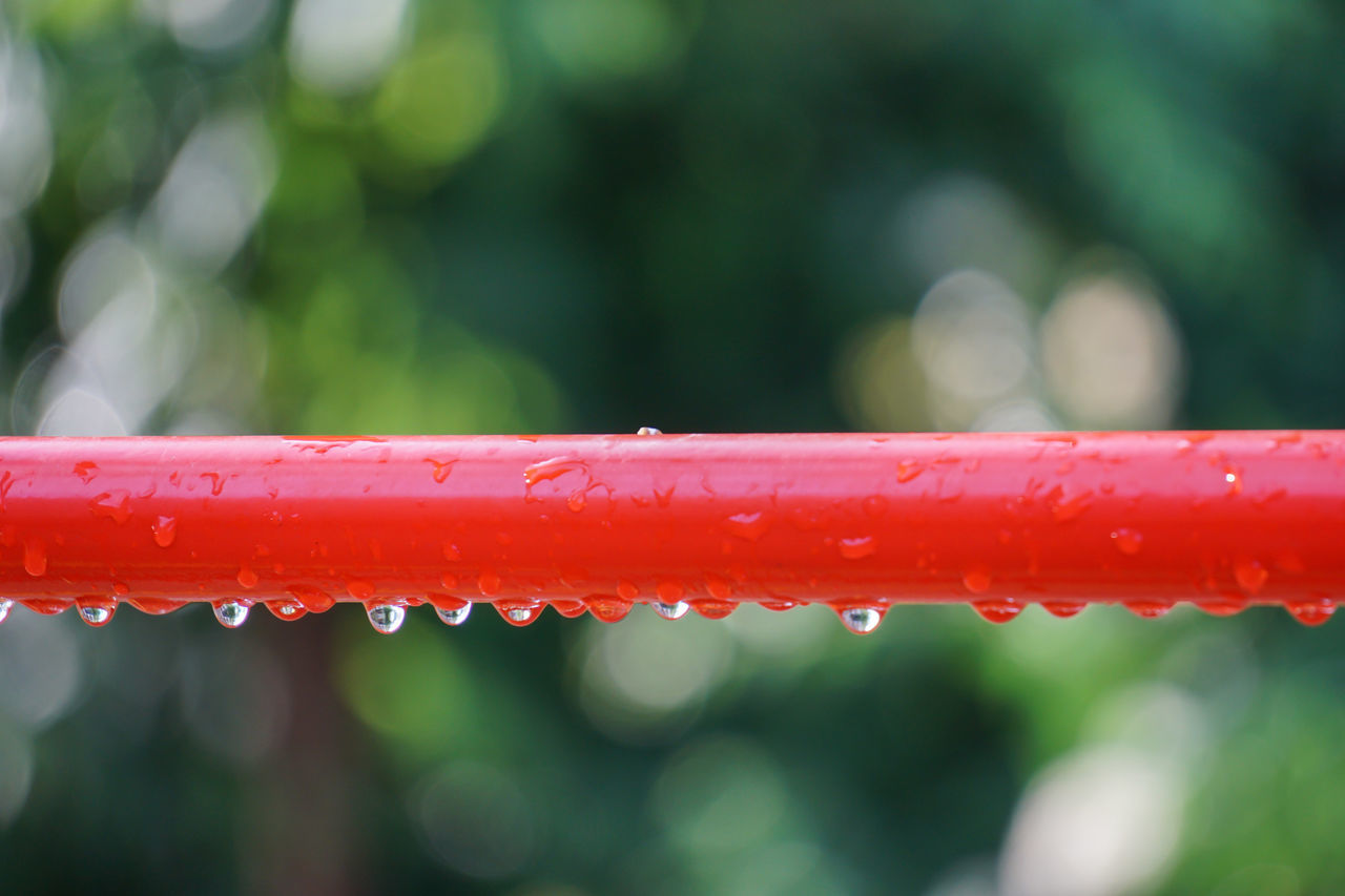 water, red, drop, focus on foreground, wet, outdoors, day, close-up, no people, raindrop, freshness, nature, beauty in nature, dripping