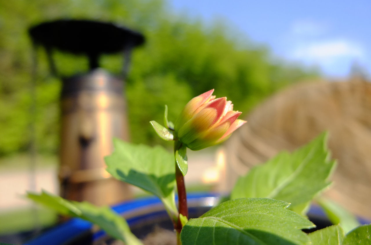 Budding Flower EyeEmNewHere Kennet And Avon Canal Narrowboat No People Off-grid Outdoors Plants And Flowers Potted Flower Potted Flowering Plant Shallow Depth Of Field Stove Pipe Sunny Day