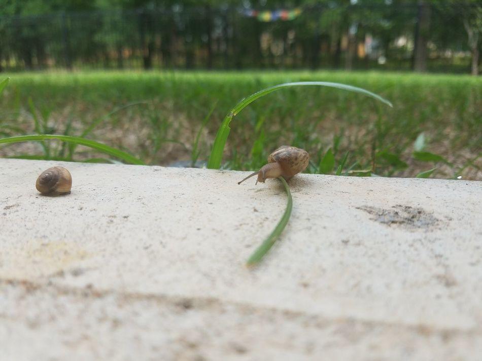 Title: Landing Location: Sugarland, TX, USA Camera: Samsung Galaxy S7 Edge No Filter No Effects No Edits As EYE Sees It Snail🐌 Backyardphotography Nature Love ♥ The Week On EyeEm