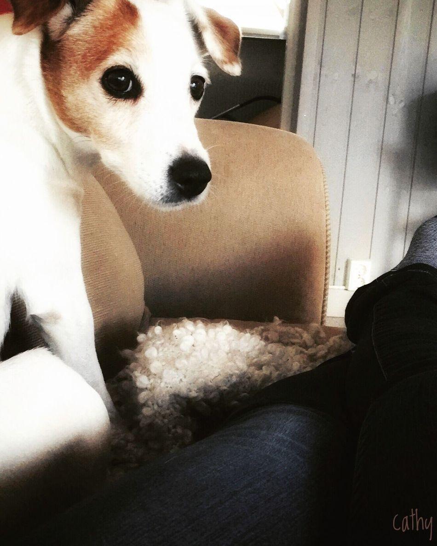 Powernap Dog My Dog Good Afternoon