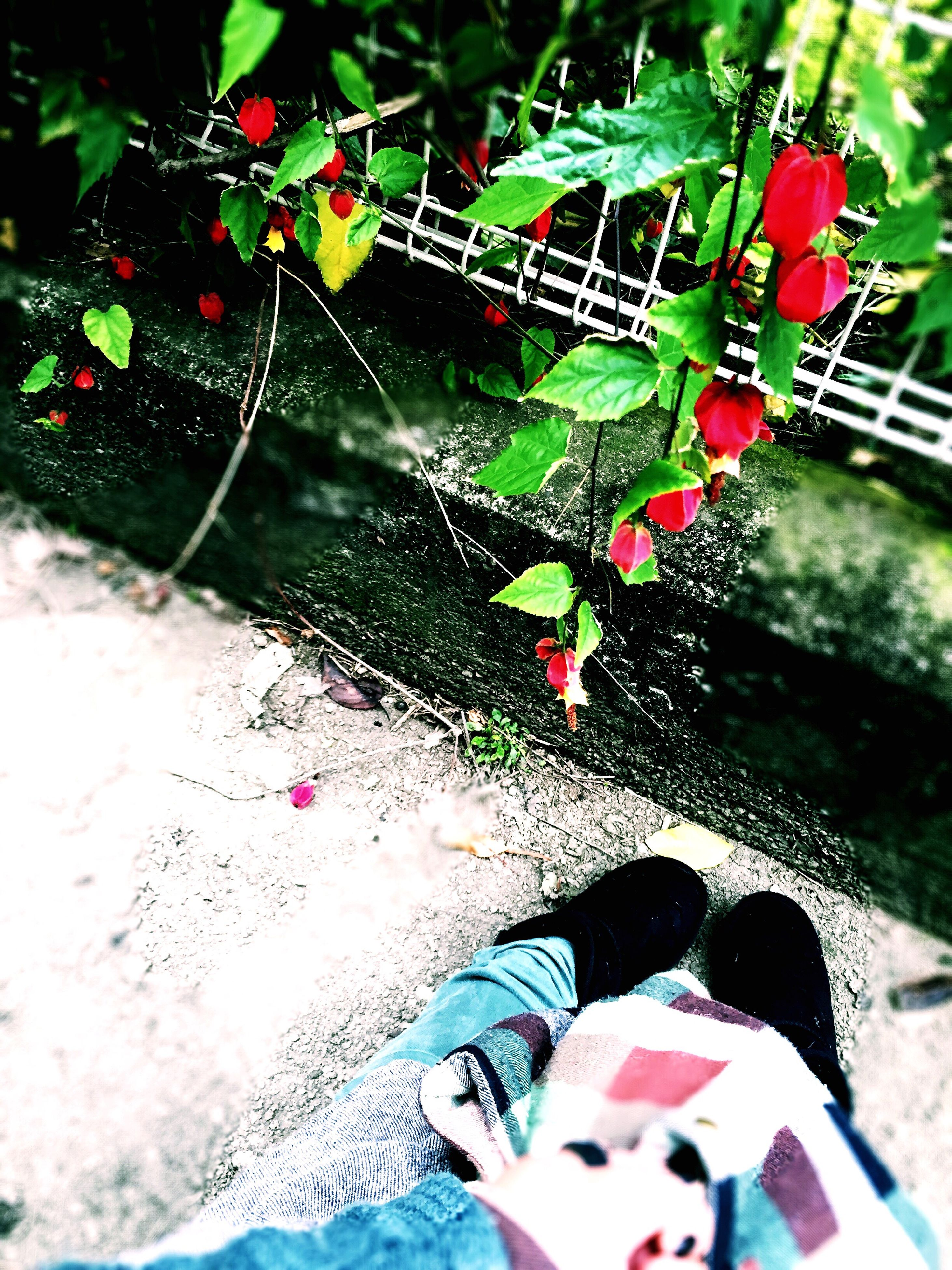 low section, red, lifestyles, high angle view, person, leisure activity, standing, personal perspective, men, outdoors, day, leaf, freshness, shoe, sunlight, flower