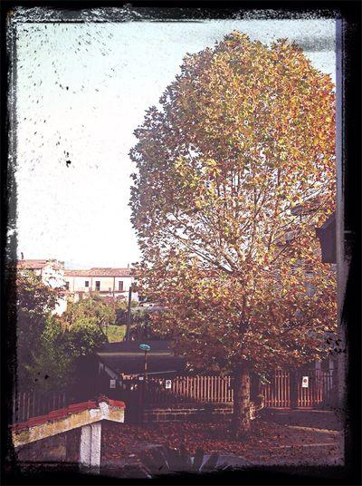 Autumn in San Martino :) Buongiorno! First Eyeem Photo