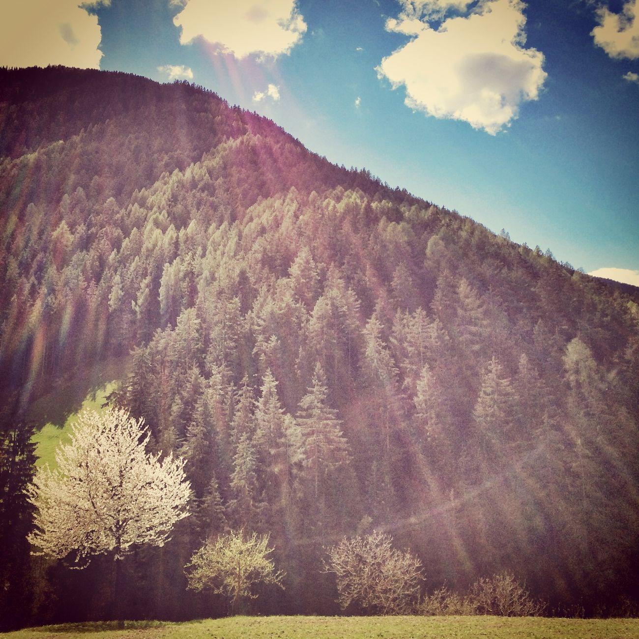Sky Mountains Trees Landscape