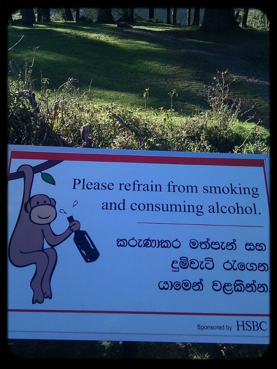 Hanging Out Sri Lanka Southasia