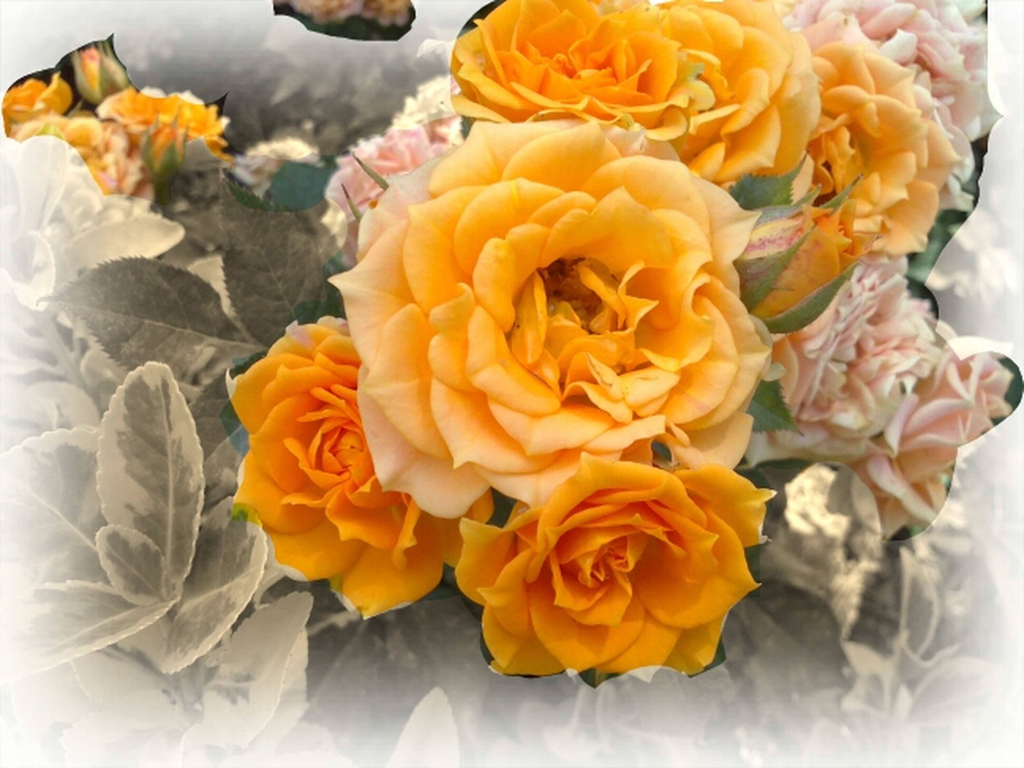 flower, petal, freshness, flower head, yellow, fragility, beauty in nature, indoors, rose - flower, close-up, high angle view, nature, bouquet, blooming, orange color, bunch of flowers, no people, multi colored, growth, plant