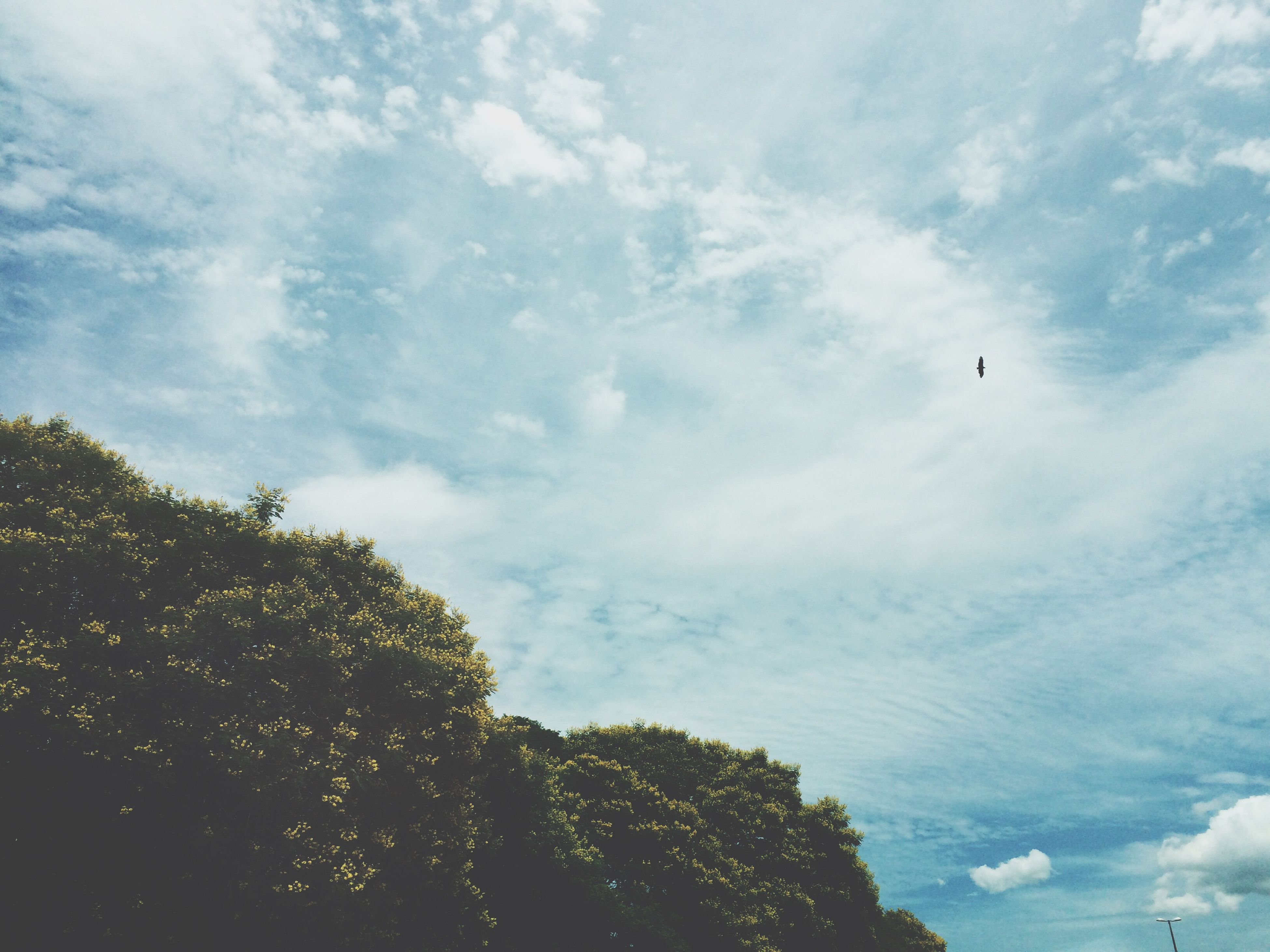 low angle view, sky, tree, cloud - sky, flying, nature, beauty in nature, growth, cloud, bird, animal themes, tranquility, cloudy, blue, day, outdoors, high section, scenics, silhouette, no people