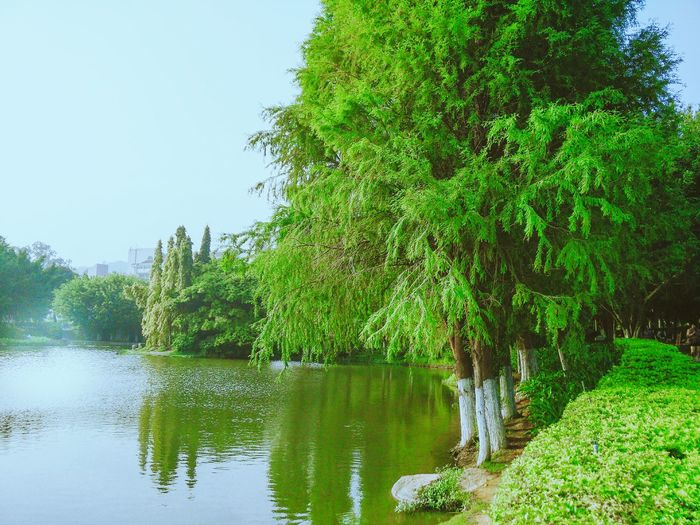 Lake On Campus At University Green Trees Green Green Green!