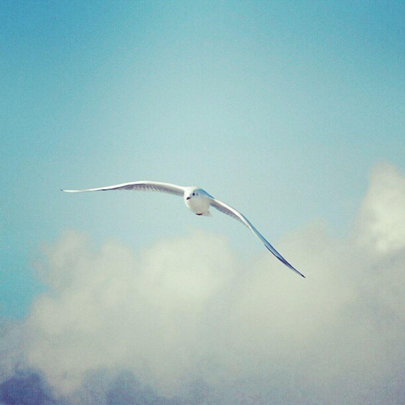 #hamburg #bird #fly #free #clouds Clouds Free Bird Fly Hamburg Igers Instagood Igfamos