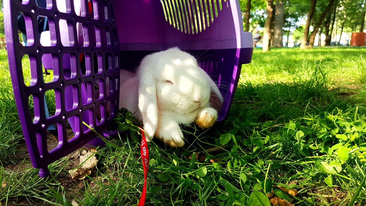 one animal, pets, animal themes, grass, domestic animals, mammal, outdoors, day, no people, nature, close-up
