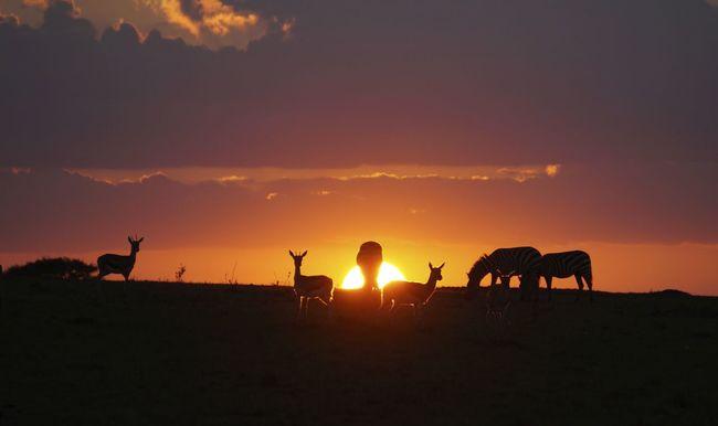 masai mara kenya Africa Animals Antilope Beauty In Nature Counterlight Grazing Idyllic Landscape Mammal No People Orange Orange Color Outdoors Remote Safari Scenics Sky Skyporn Sun Sunset Tranquility Symmetry In Nature Symmetry Posing For The Camera