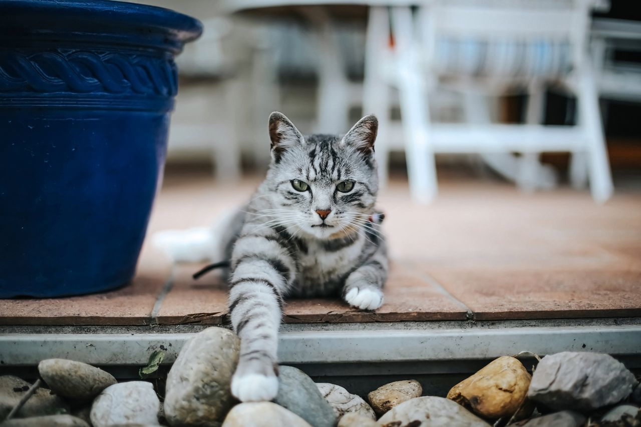 Beautiful stock photos of katzen, Animal Themes, Day, Domestic Animals, Domestic Cat