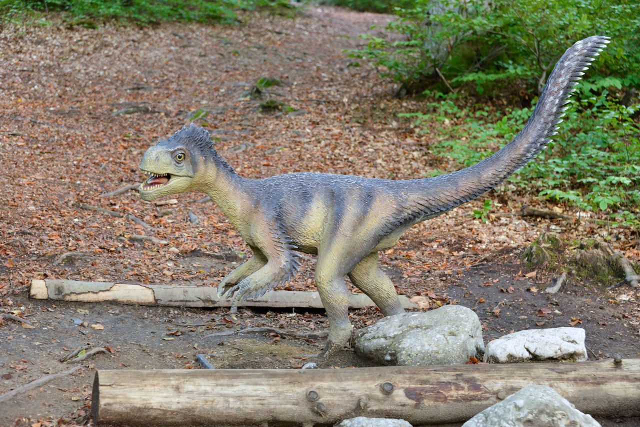 Model of a dinosaur in Dino Parc in Rasnov, Romania Animal Themes Animal Wildlife Animals In The Wild Apatosaurus, Extinct, Day Grass Iguana Mammal Nature No People One Animal Outdoors T-rex