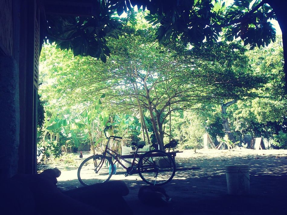 Trees Bike Japanesebike Afternoon