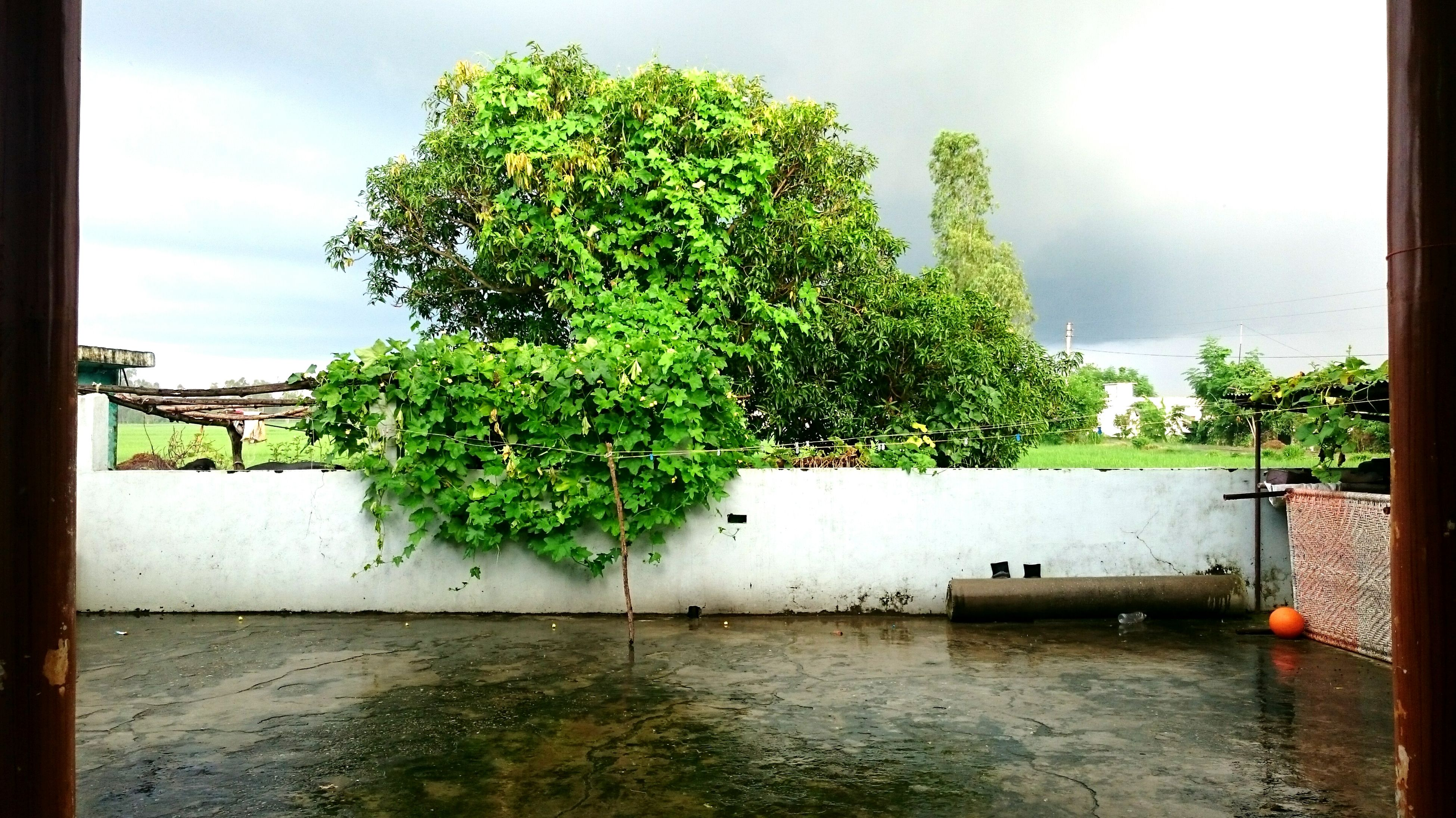 tree, water, sky, day, no people, nature, tranquility, outdoors, scenics, architecture, built structure, growth, beauty in nature, building exterior