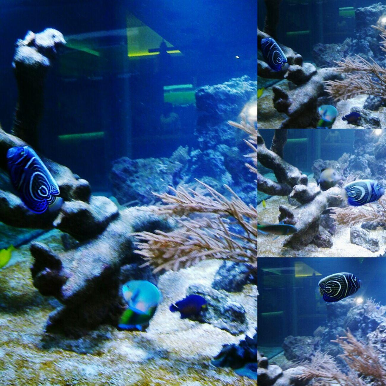 Blue Collage Aquarium Aquatic Life Justtakingpictures :)