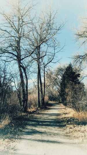 vintage walk. Old Path Vintage Style 70's Vintage Landscape #Nature #photography Day Sky No People Nature The Way Forward Outdoors Road Tree EyeEmNewHere