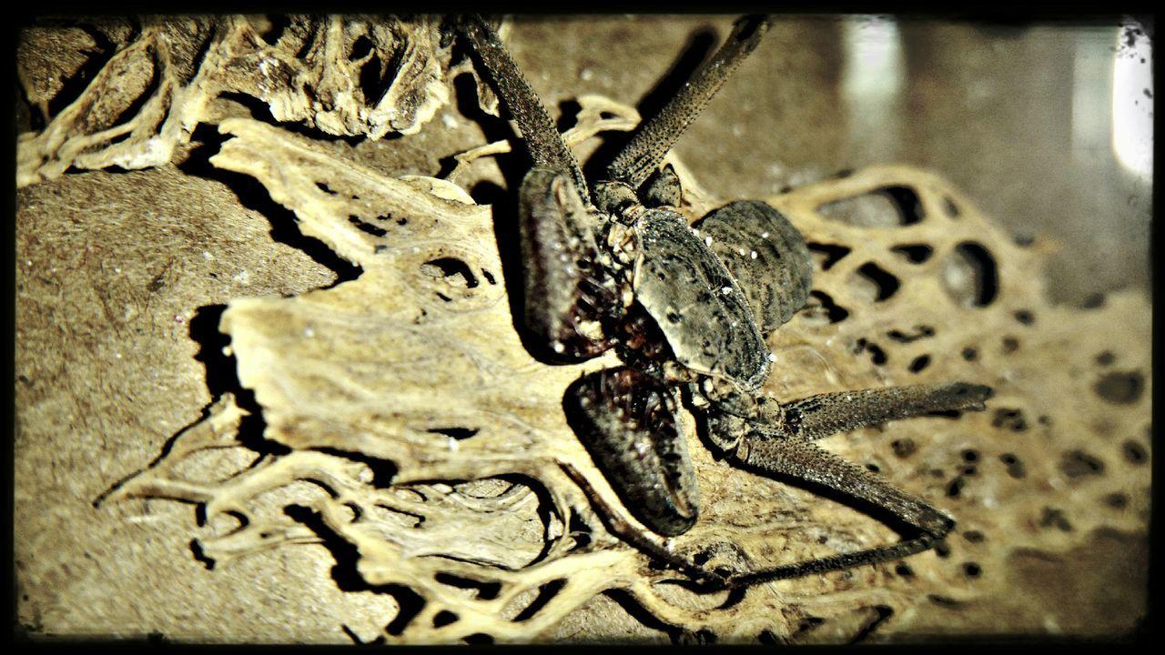Animal Themes No People Close-up One Animal nature Exoskeleton Nopal Nopal Cactus Naturaleza Muerta First Eyeem Photo Mexico EyeEm Gallery