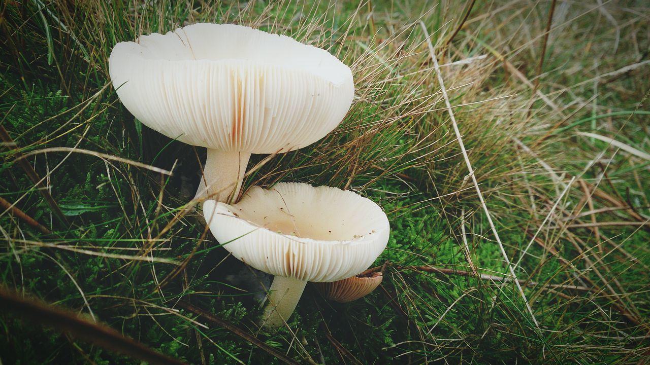 Mushroom Hunting on Vlieland  EyeEm Nature Lover Shroomin' Nature