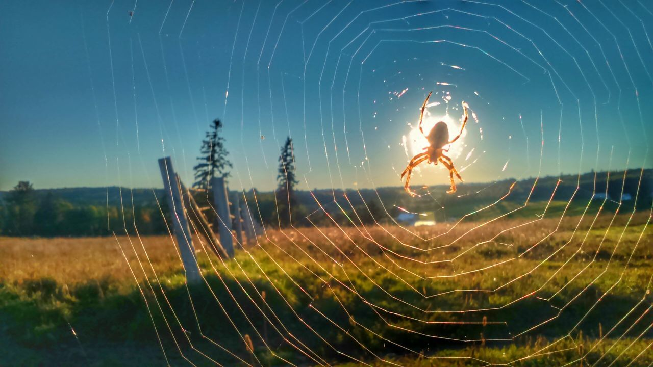 Glowing Beauty In Nature Field Nature Spiderweb Spider Wooden Post Countryside Itsy Bitsy Spider Fence Eye4photography  EyeEm Nature Lover EyeEm Best Shots Nature Photography Naturelovers No People Scenics Close-up EyeEmNewHere