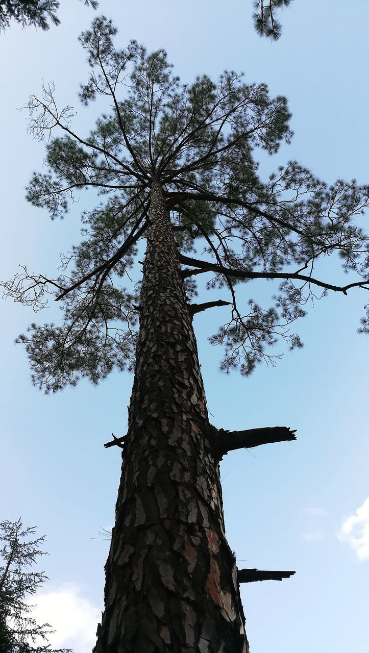 tree, low angle view, tree trunk, nature, branch, growth, day, sky, outdoors, no people, beauty in nature