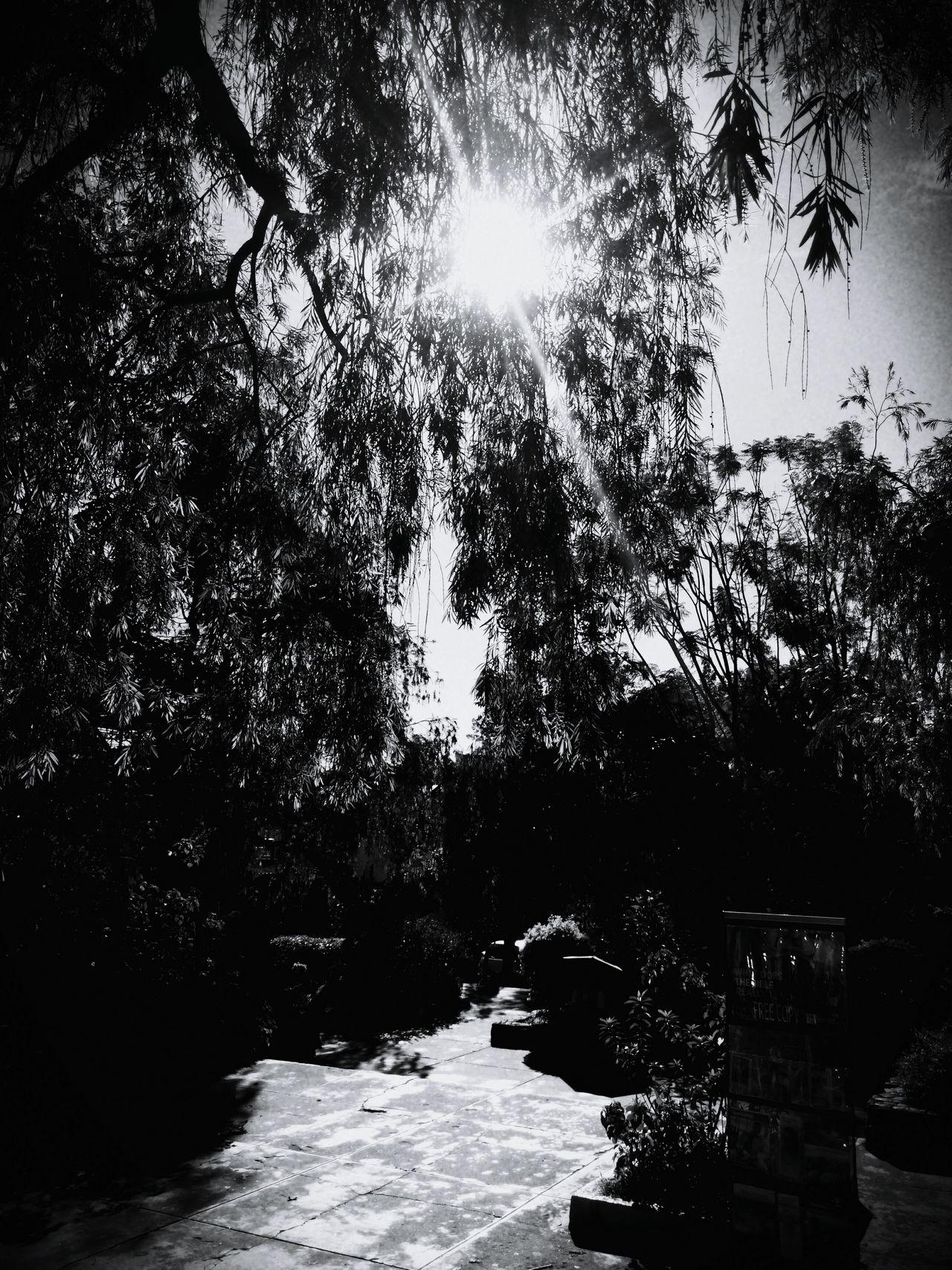 Learn & Shoot: Single Light Source Sun Reflection Sun Peeking Through Trees_collection Sunnyday☀️ Sunny☀ Blackandwhite Dayatthepark PassingBy Streetphotography