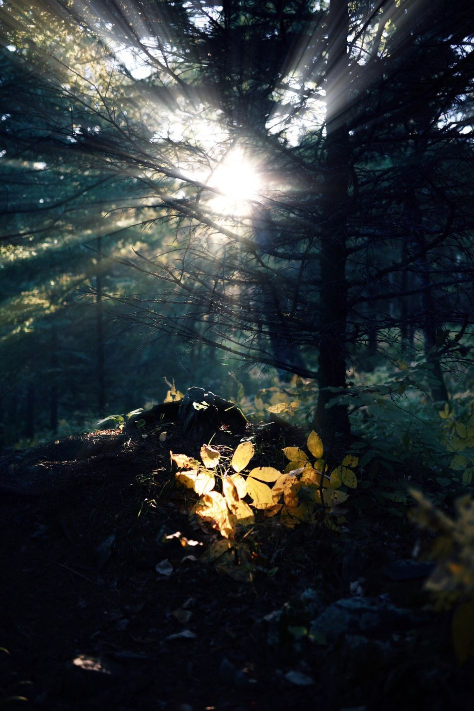 Beautiful stock photos of sunshine, Beauty In Nature, Carlton, Day, Forest