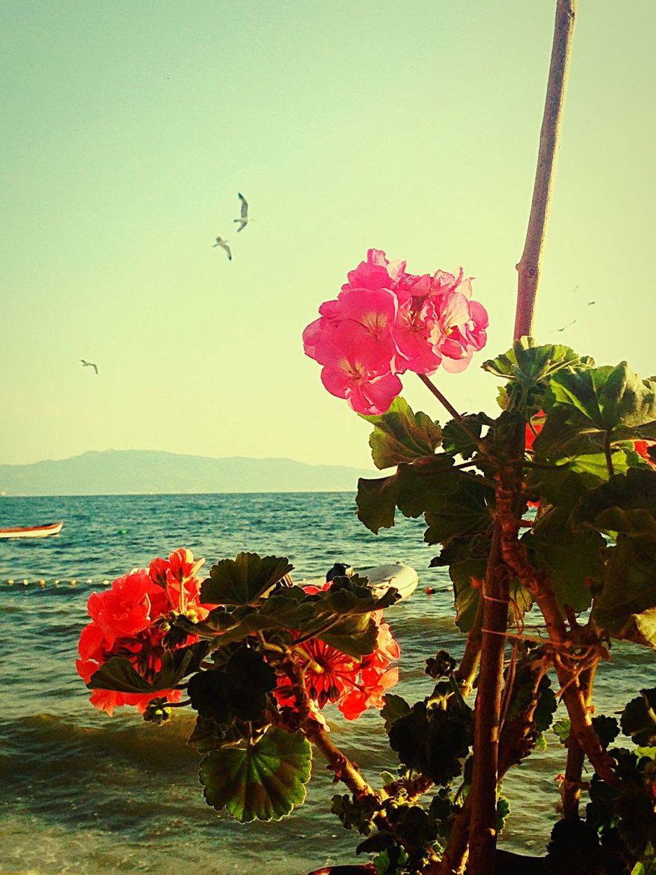 Enjoying The Sun Sea Sunshine Relaxing Weekend Hello World Enjoying Life Beautiful Day Marmarasea Flowers