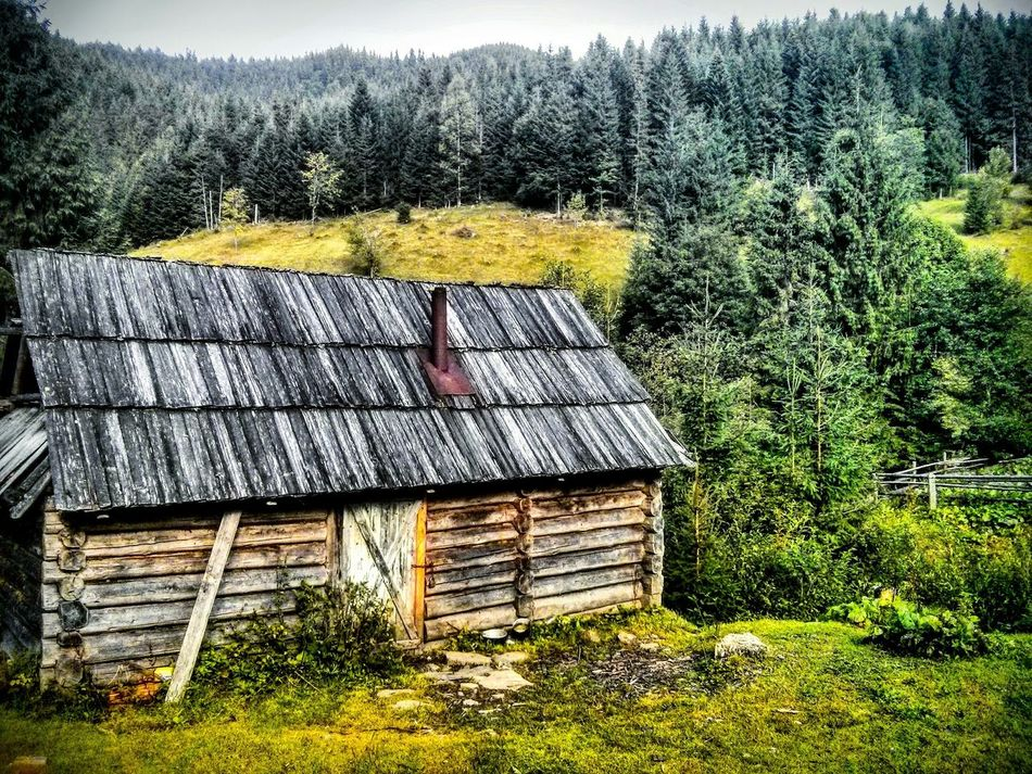 Ukraine Karpathian Beauty In Nature River Landscape Green Color Tree