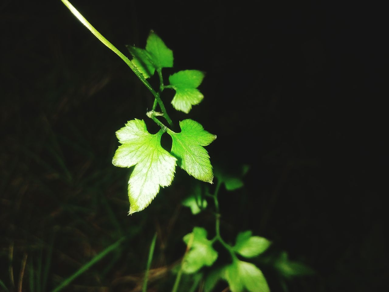 growth, plant, nature, leaf, green color, beauty in nature, fragility, freshness, no people, outdoors, night, flower, close-up, flower head