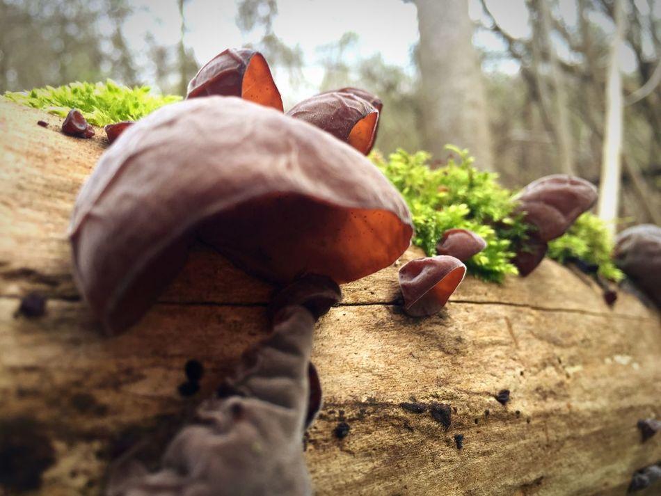 Tree Nature Champignon Mushroom Champignons Champignons Des Forêts Forest