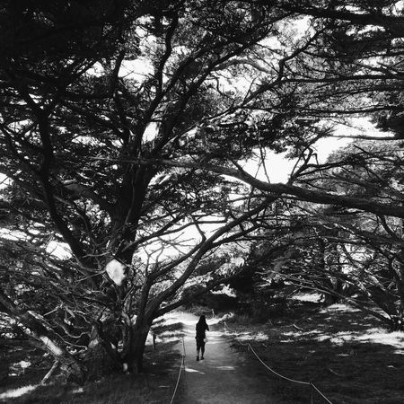 you can't go home again Landscape Nature Point Lobos Blackandwhite Black And White