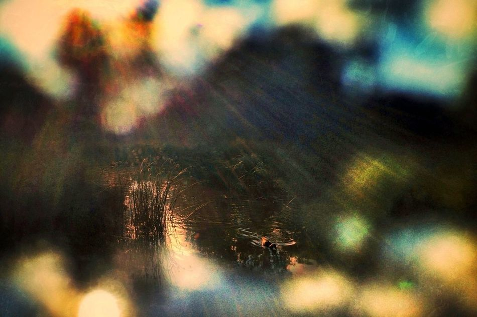 AMPt_community Lens Whacking Nature_collection Schattenspiel