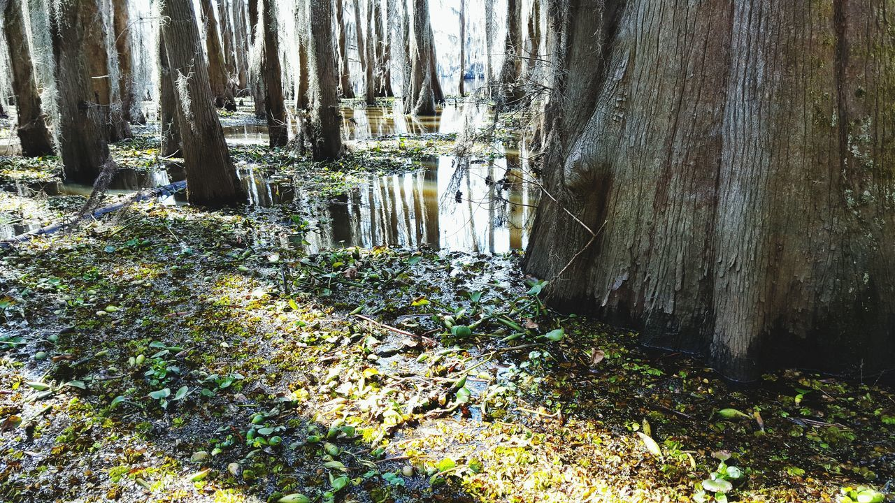 Caddo Lake Landscapes With WhiteWall Tree Trees And Sky Nature_collection Here Belongs To Me Uncertain, TX EyeEm Nature Lover Outdoors Lake View Things I Like 43 Golden Moments