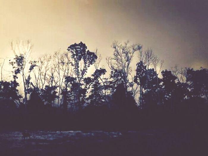 Black forest Monochrome Silhouette EyeEm Best Shots Landscape