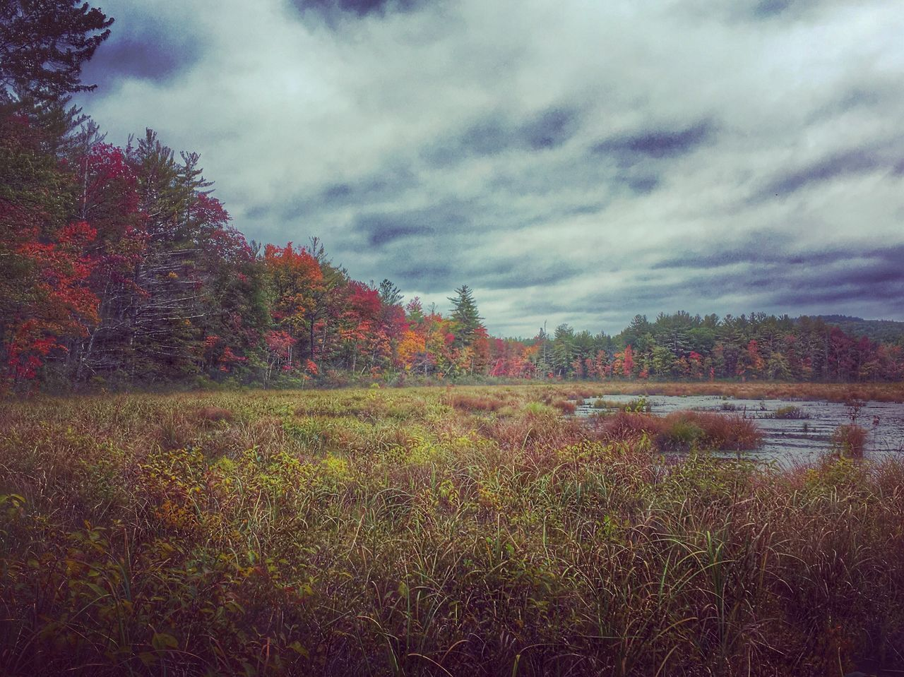 Swamp Life Newengland Newhampshire Gooutside Swamp Photos Morningmeditation Autumn Autumn Colors AutumnInNH