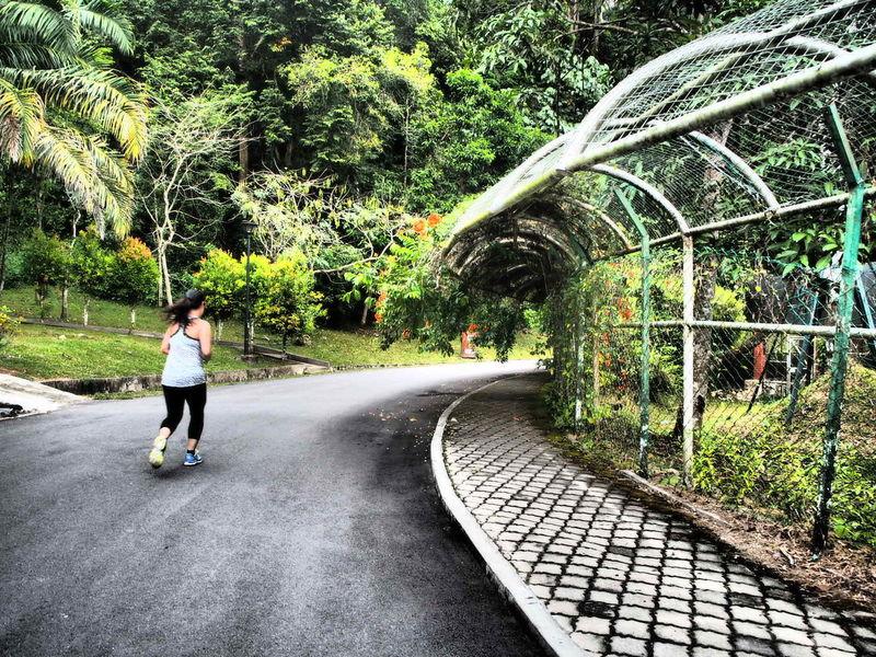 Botanical Gardens Jogging Taking Photos Omd-EM10 Art Filter