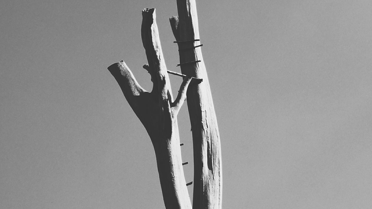 Alone - Grace Outdoors Day Treetrunk Alone Still Image Blackandwhite Art Picture