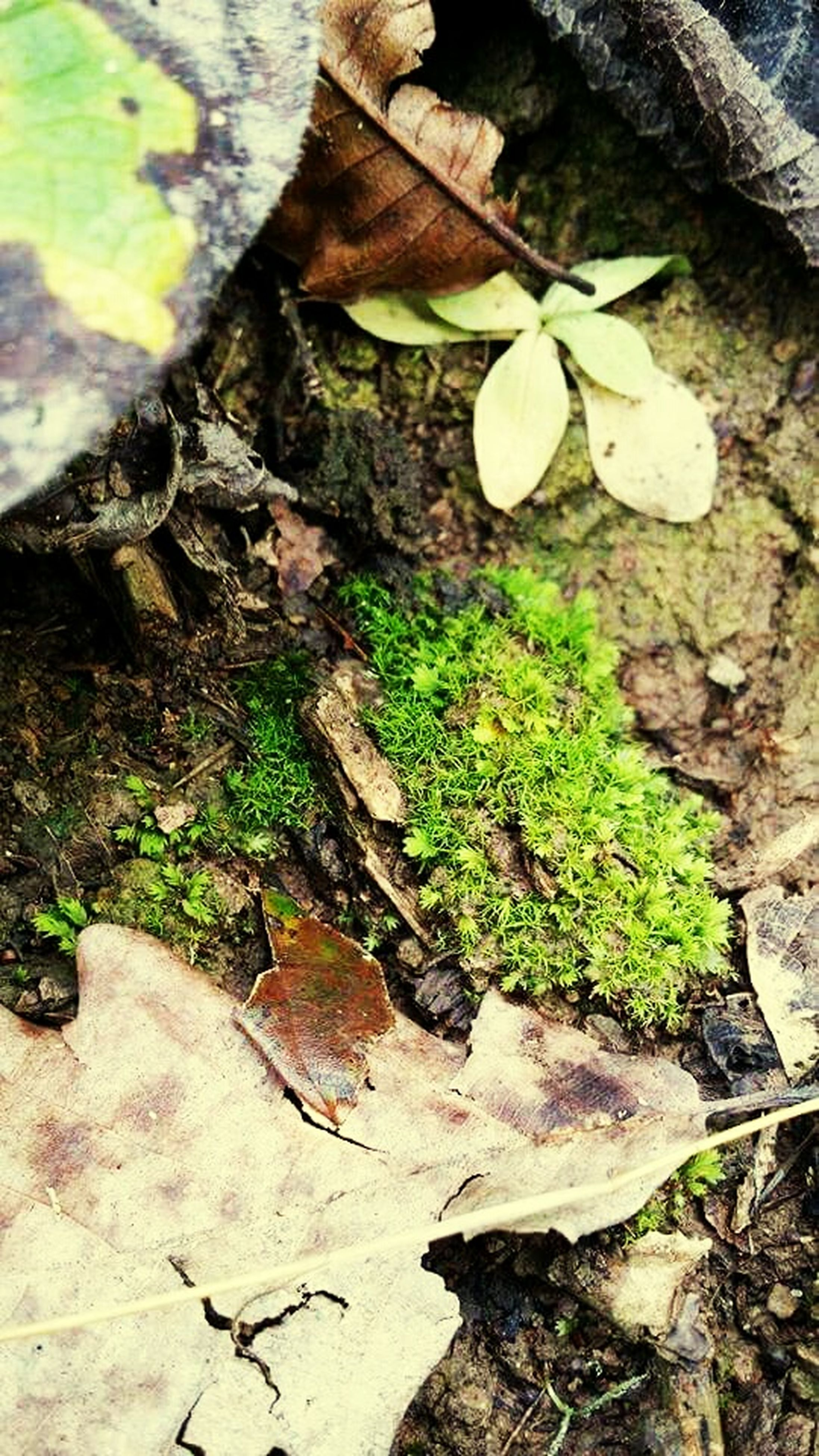 growth, leaf, high angle view, plant, close-up, nature, wood - material, growing, day, outdoors, field, green color, no people, ground, fragility, dirt, moss, freshness, tree trunk, fungus