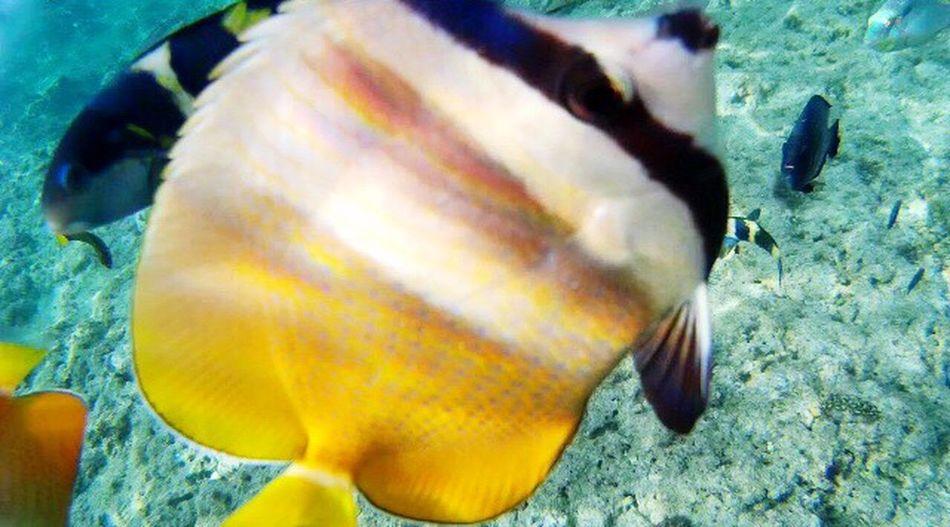 Fish Snorkeling Underwater Photography Underwater Panglao SJCAM PicturePerfect Happiness Playing In The Water LivingLife Beautiful Creation Underwater Camera