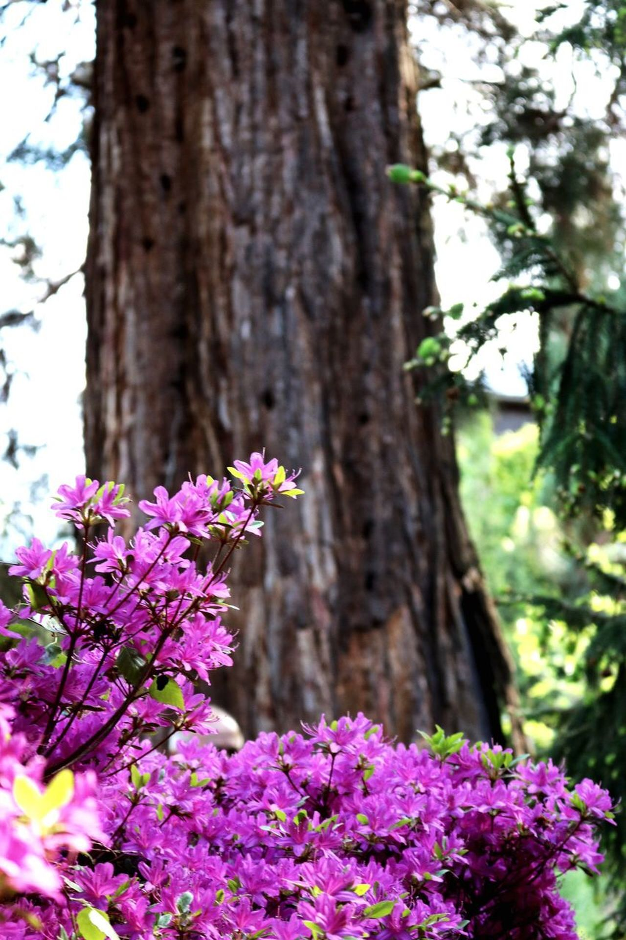 Purple Flowers Sequoia Spring In The Mountains Beauty In Nature Freshness