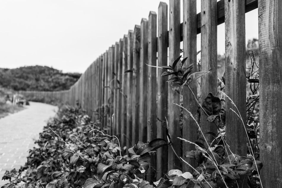 Blackandwhite Blackandwhite Photography Day Fence Island Langeoog Nature No People Outdoors Paths Plant Plants Sky Wood - Material