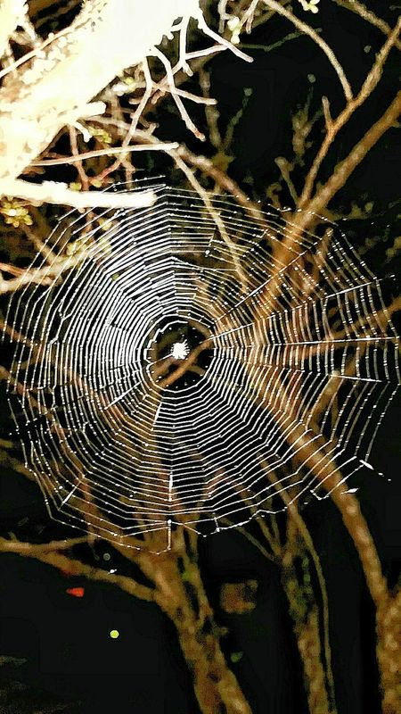 Pattern Spider Web Close-up No People Complexity Outdoors Fragility Concentric Nature Day Web Macro Glowing Night Macro_collection Arachnid Illuminated Night Insects Natures Architecture Insect Macro Spider Close Up Detail Design Shapes And Patterns