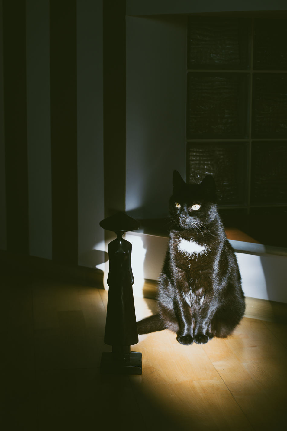New spots, new perspectives - new home Animal Themes At Home Black Cat Black Color Day Domestic Animals Domestic Cat Indoors  No People One Animal Pets Sitting Sunlight Art Is Everywhere
