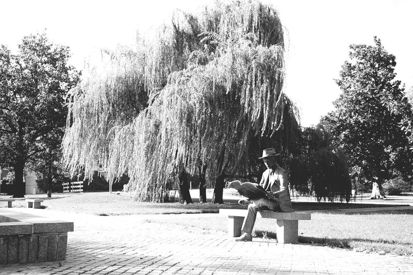 Tree Park - Man Made Space Nature Bench Day No People Growth Beauty In Nature Outdoors Sky Horizontal Monochrome Photography