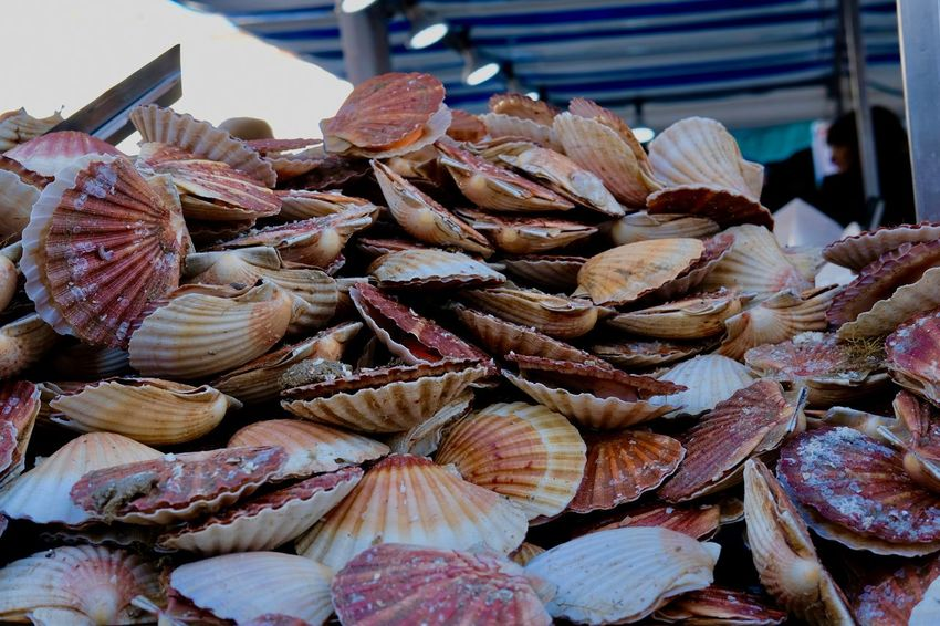 EyEmselect Sea Shells Abundance Close-up Day Food Food And Drink For Sale Freshness Healthy Eating Large Group Of Objects Market No People Outdoors Raw Food Retail  Seafood Shell Photography