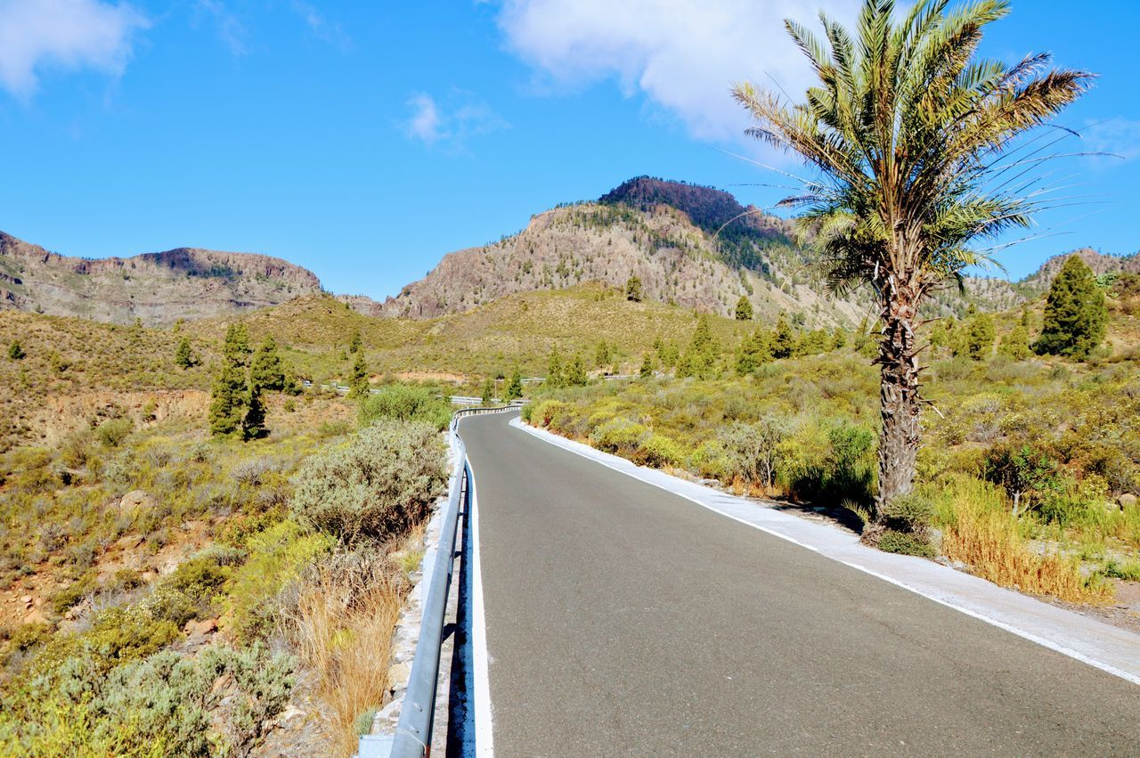 Road Transportation Mountain Tree Nature Landscape Scenics The Way Forward Sky Day No People Tranquil Scene Mountain Range Land Vehicle Outdoors Desert Beauty In Nature